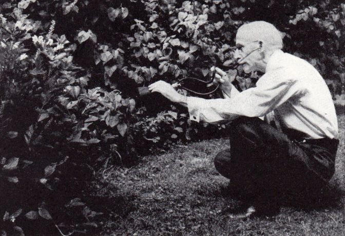 http://commons.wikimedia.org/wiki/File:FEL_listening_to_Insects.jpg